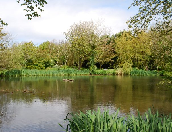 Pond in cottage grounds